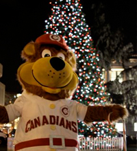 Bob Brown Bear At The 2008 Christmast Tree Lighting