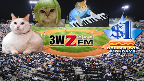 Cats of nearly all stripes will be at the ballpark for Purr in the Park!