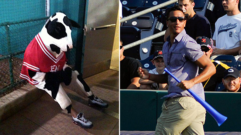 Derek Moye dressed as a cow and a 'Jersey Shore' character for the State College Spikes.